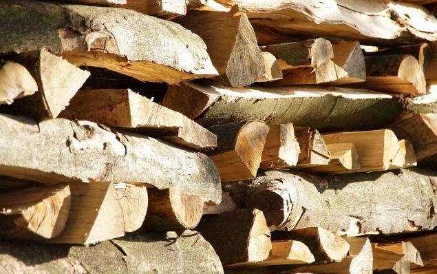 «Καλύτερα καυσόξυλα είναι σίγουρα η λευκή δρυς ('δένδρο'), το πουρνάρι, επίσης και η ελιά»