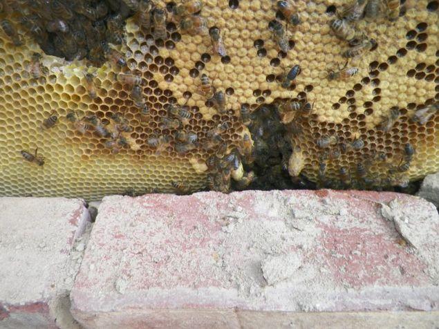 Και φυσικά ήταν γεμάτη με μέλι.