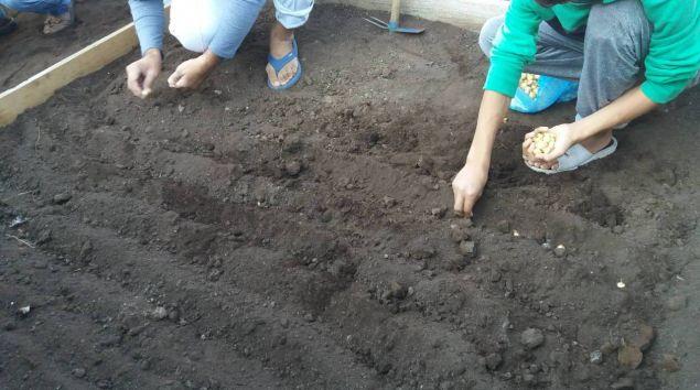 Πλέον οι πρόσφυγες στη Δράμα πρόσφυγες καλλιεργούν τα δικά τους φρέσκα λαχανικά