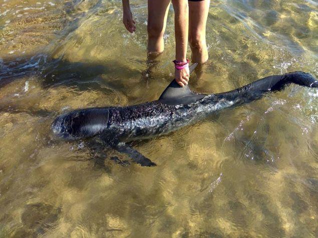 Aμέσως υπήρξε κινητοποίηση προκειμένου να σώσουν το δελφίνι