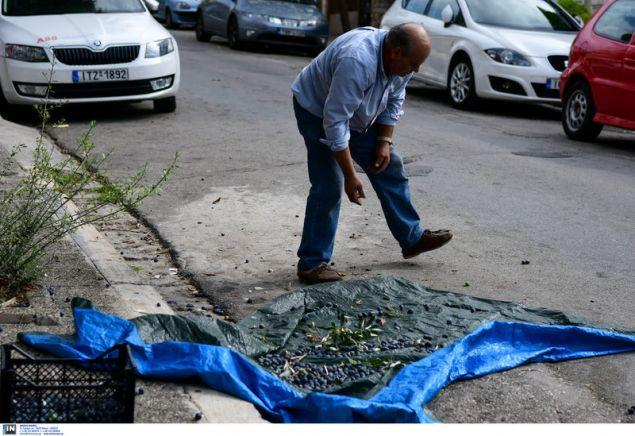 Καταμεσής του δρόμου μαζεύει τις ελιές -Φωτογραφία: Intimenews/ΠΑΝΑΓΙΩΤΟΠΟΥΛΟΣ ΝΙΚΟΣ