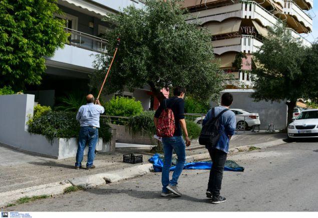Οι περαστικοί χαζεύουν την συγκομιδή της ελιάς στο... Παλαιό Φάληρο -Φωτογραφία: Intimenews/ΠΑΝΑΓΙΩΤΟΠΟΥΛΟΣ ΝΙΚΟΣ