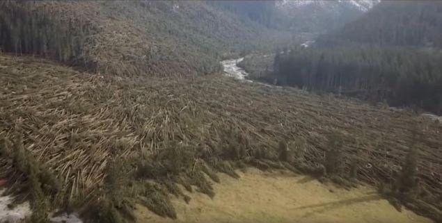 Πάνω από 14 εκατομμύρια δέντρα έχουν καταστραφεί από τις πλημμύρες