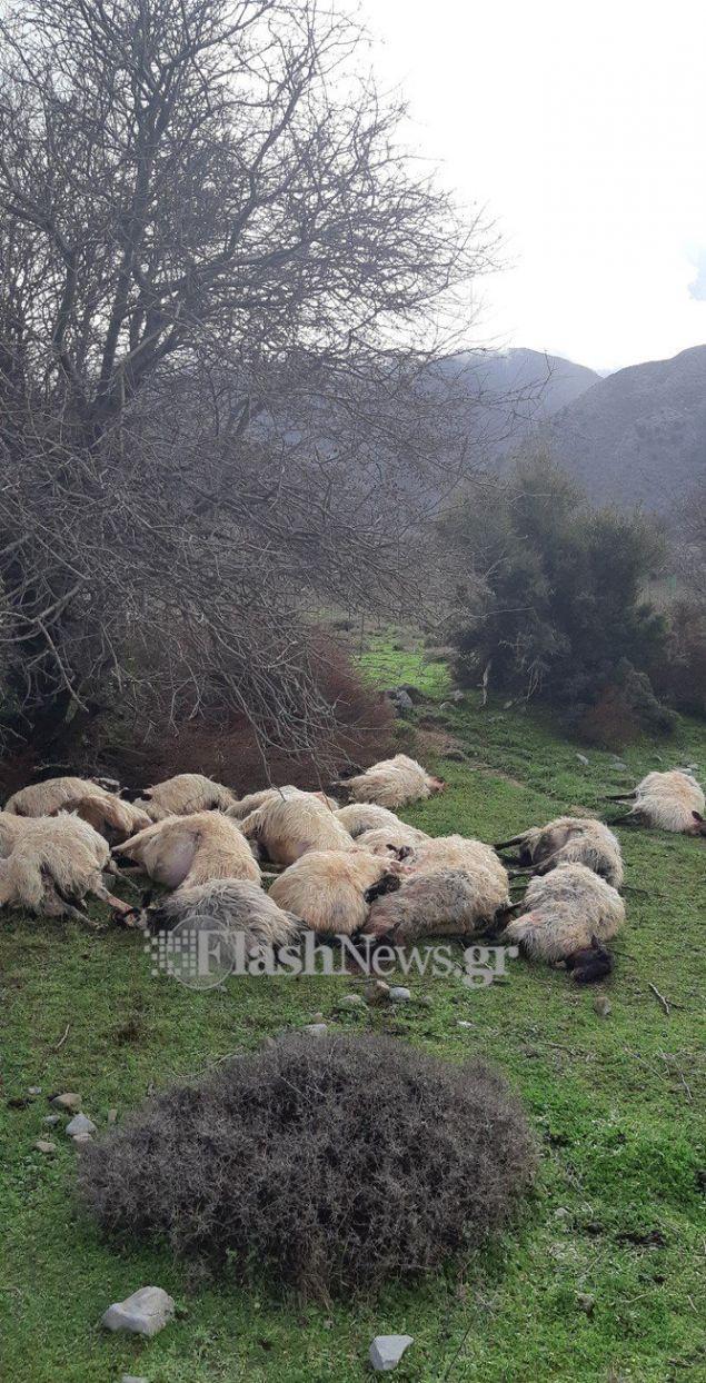Αποκαρδιωτική εικόνα από τα άτυχα ζώα που χτυπήθηκαν από τον κεραυνό, φωτογραφία: flashnews.gr