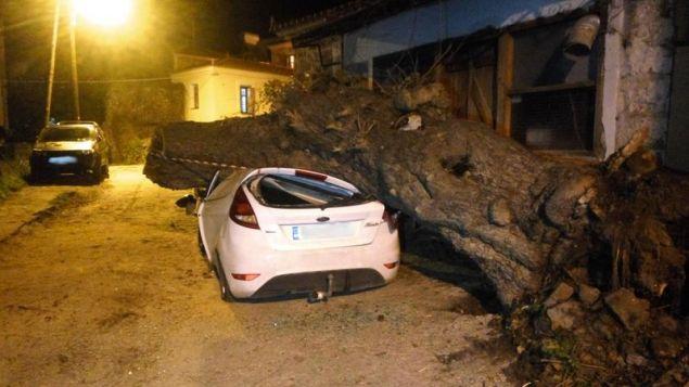Το γέρικο δέντρο διέλυσε το αυτοκίνητο