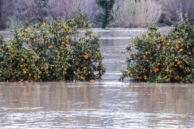 Καταστράφηκαν καλλιέργειες φωτογραφία:  ilialive.gr