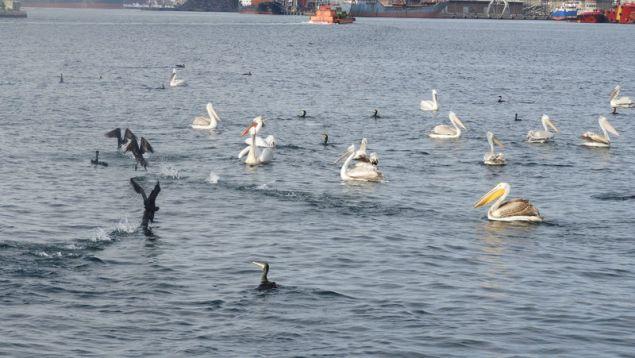 Τα πουλιά άλλαξαν το τοπίο της πόλης