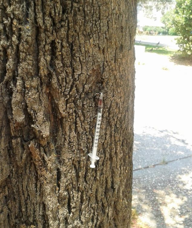 Εικόνα θλίψης και οργής -Σύριγγα καρφωμένη σε δέντρο