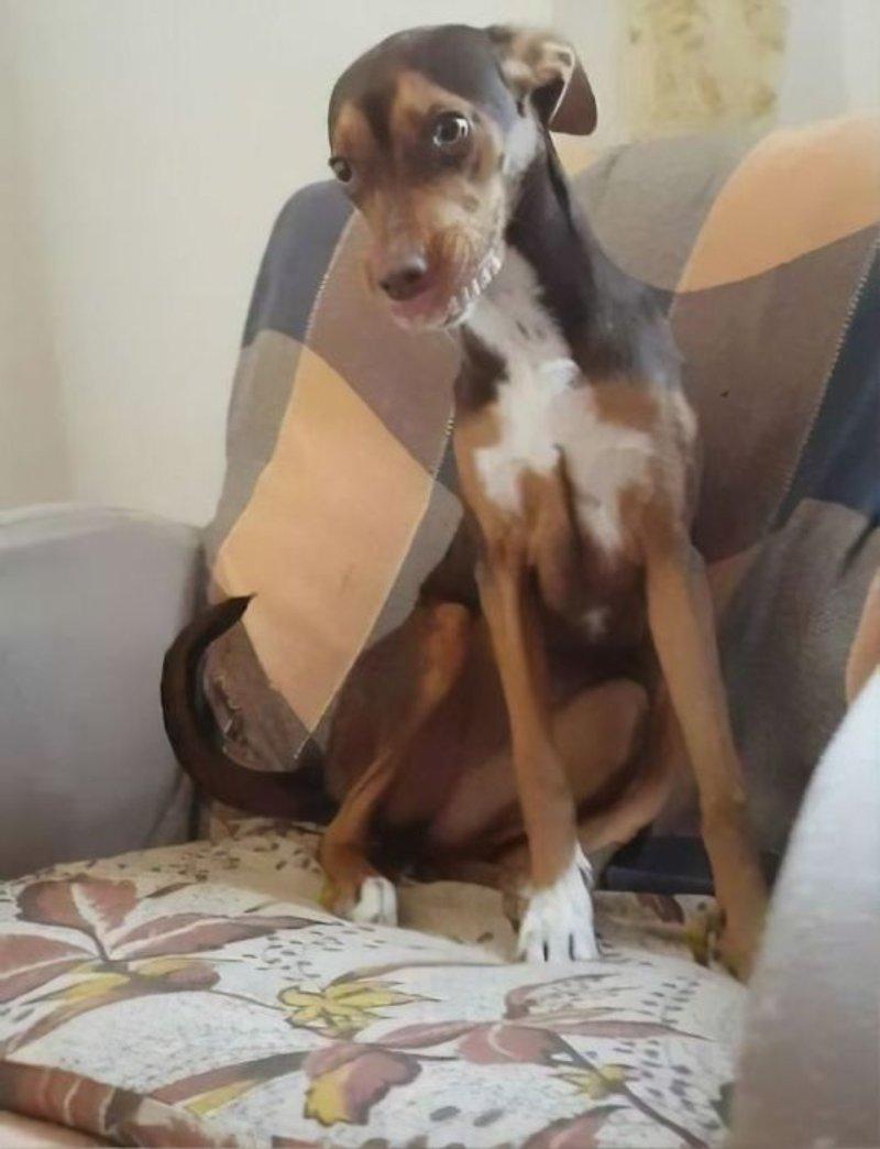 Σκύλος με μασέλα