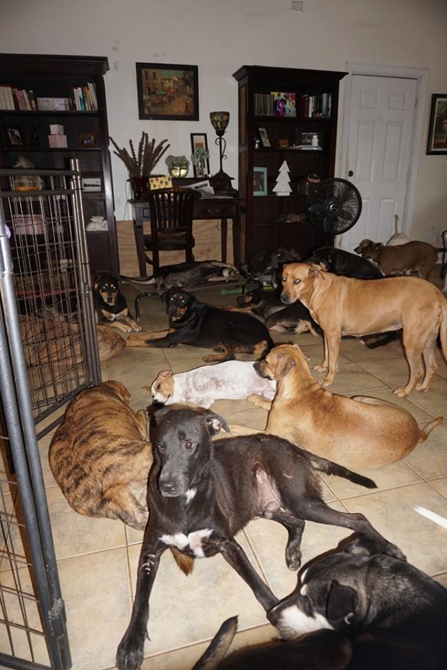 Όπως αναφέρει στην ανάρτησή της, επικρατεί ένα χάος μέσα στο σπίτι της, αλλά τουλάχιστον είναι όλα τους προστατευμένα από τον τυφώνα Dorian